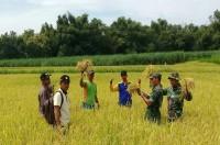 Pengubinan Di Desa Pucuk Mendapat Pendampingan Babinsa Koramil 08 Dawarblandong