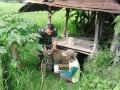 Babinsa Montong Sekar Terjun Ke Sawah Bantu Petani Penyemprotan Hama