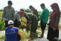 Bersama PPL Babinsa Koramil 0815/08 Dawarblandong, Dampingi Pengubinan