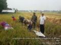 Peran Aktif Babinsa Koramil 0815/09 Mojosari Dalam Pendampingan Ketahanan Pangan