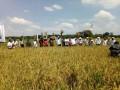 Panen Raya Poktan Tani Maju Gempolkrep Mojokerto Dihadiri Meneg BUMN