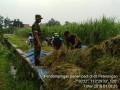 Panen Padi Poktan Sari Tani Dusun Sukorejo Desa Peterongan Mendapat Pendampingan Babinsa