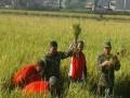 Bati Wanwil Koramil 0815/12 Ngoro Bersama Poktan Tani Sukoanyar Lakukan Pengubinan