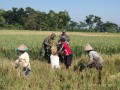 Bersama PPL Babinsa Koramil 0815/13 Kutorejo Dampingi Poktan Pengubinan