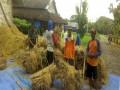 Berkat Pendampingan Babinsa Dalam Pertanian, hasil Panen padi Menjadi Melimpah