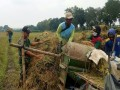 Peran Nyata Babinsa Dalam Pendampingan Petani Mulai Dari Tanam Hingga Panen Padi