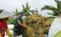 Berkat Pendampingan Babinsa, Petani Bisa Ikut Menciptakan Swasembada Pangan Secara Nasional