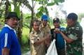 Babinsa Pos Ramil Mojoanyar Bersama PPL Dampingi Poktan Pengubinan Padi