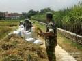 Babinsa Koramil 0815/05 Gedeg Dampingi Poktan Tani Maju Panen Padi Sistem Singgang