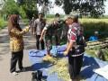Babinsa Koramil 0815/04 Puri Bersama PPL Dampingi Poktan   Tangunan Pengubinan Padi