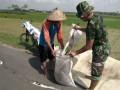 Jaga Kesuburan Tanaman Padi, Babinsa Bantu Petani Dalam Pemupukan padi