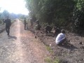 Satgas TMMD 101 Kodim Jombang Menanam Pohon Trembesi Di Kanan Kiri Jalan