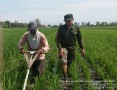 Babinsa Banjaragung Dampingi Petani Lakukan Penyiangan Gulma