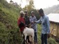Pra TMMD Pok Ternak Mendo Joyo Desa Jembul Terima Bantuan Kambing Maskin