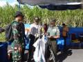 Cara Cerdas Bertanam Padi Lewat Temu Lapang Field Farm Day