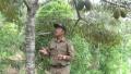 Lereng Wilis Menjadi Lahan Yang Menggiurkan Dengan Tanaman Durian