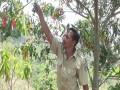 Geliat Genitri Membuka Transformasi Ekonomi Warga Desa Jugo