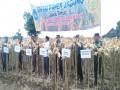 Dirjen Tanaman Pangan Kementan RI Bersama Waaster KASAD Tinjau Lokasi Panen Padi Di Wilayah Kodim 0812  Lamongan