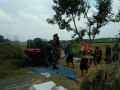 Babinsa Koramil 0815/02 Trowulan Dampingi Poktan Gawe Makmur-2 Panen Padi Ciherang