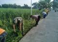 *Wujudkan Lingkungan Bersih Babinsa Simongagrok Ajak Warga Bersihkan Lingkungan*