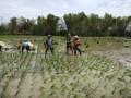 Percepat Masa Tanam, Sertu Sudarno Lakukan Pendampingan Petani dalam pengolahan lahan sampai dengan Tanam Padi