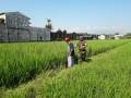 Babinsa Sumampir Ikut Membedah Lahan Pertanian Di Dekat Pusat Perkotaan