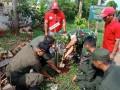 Perkokoh Kodisi Tanah, Koramil Paciran Tanam Pohon Di Ruas Kanan Kiri Jalan