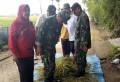 Dukung Ketahanan Pangan, Babinsa Koramil 0815/14 Bersama PPL Dlanggu Lakukan Pendampingan Pengubinan