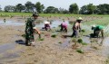 Babinsa Pos Ramil Gayam, Terus Dorong Petani Lokal Dalam Program UPSUS PAJALE